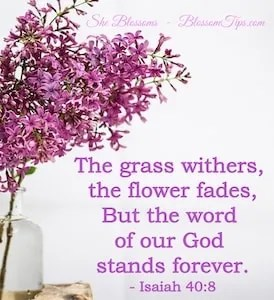 Ways to Increase Your Faith When Brokenhearted She Blossoms Genesis 43