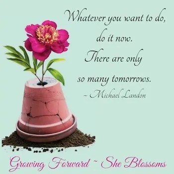 She Blossoms How to Stop Doing What You Dont Want to Do Leviticus 7