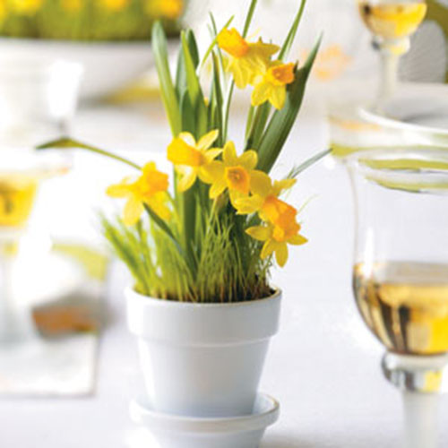 Love these cute litte pots of Daffodils