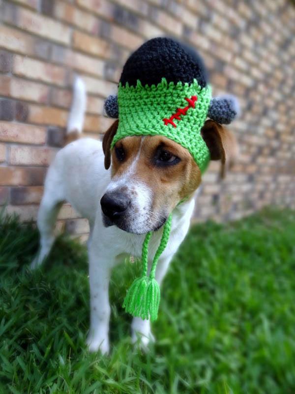 Frankenstein Dog costume- so cute!