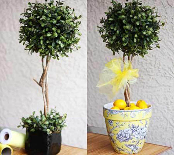 Love these topiary lemon trees!