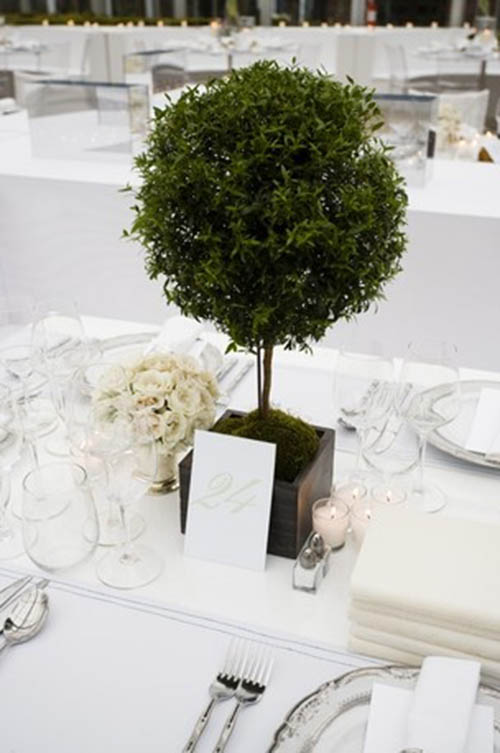 Lovely Topiary Centerpiece