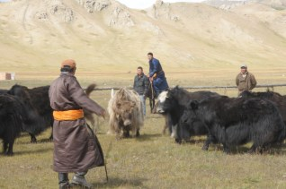 finding a yak to kill
