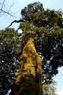 Tree on Mount Victoria