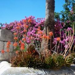Gethsemane cacti