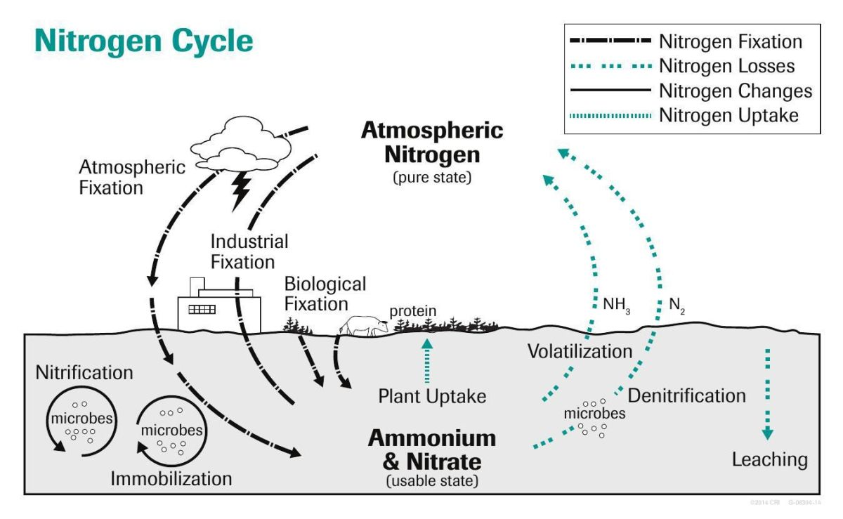 hight resolution of download pdf nitrogen cycle