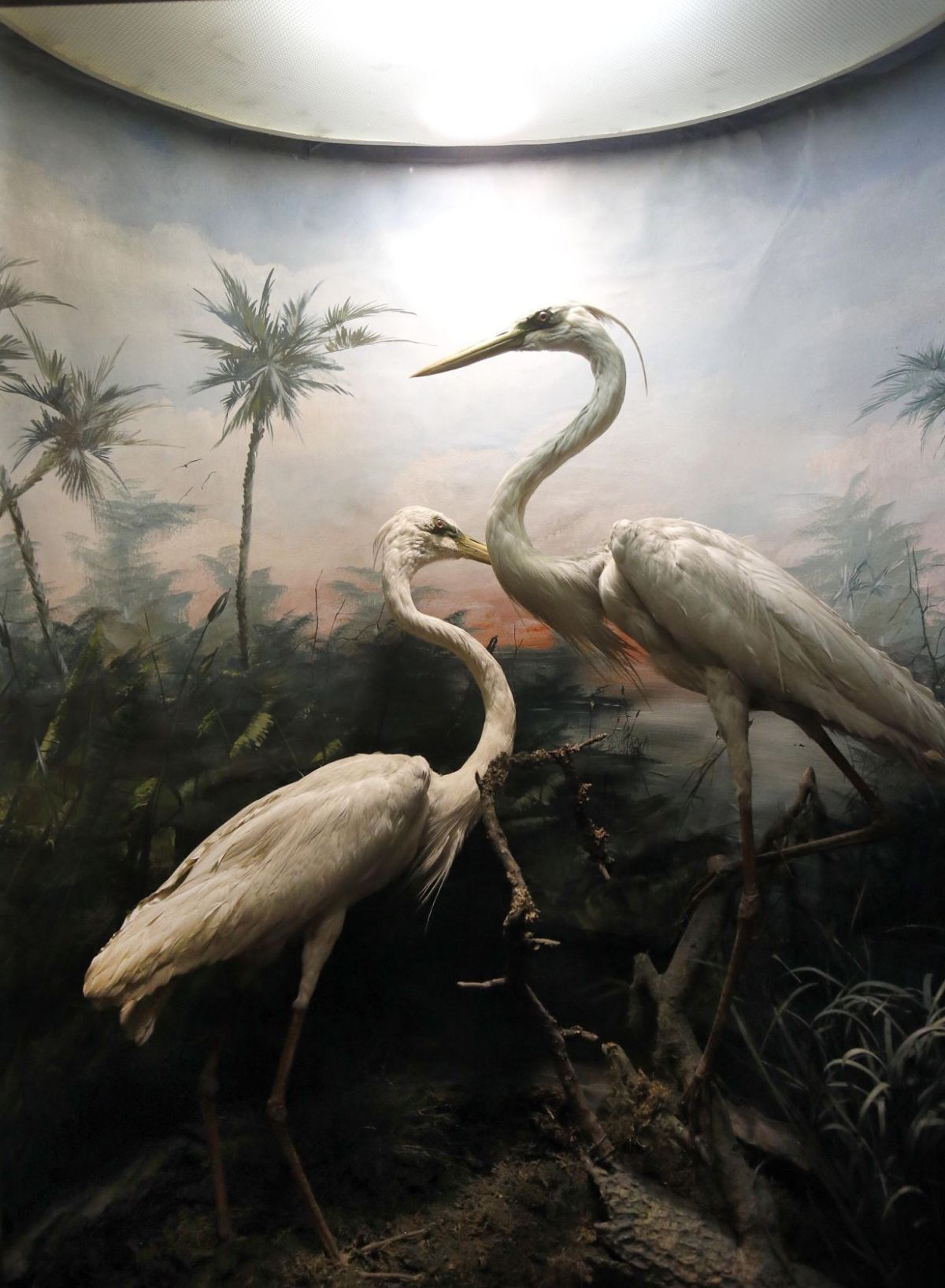 Anniston Museum Of Natural History Marks 85th