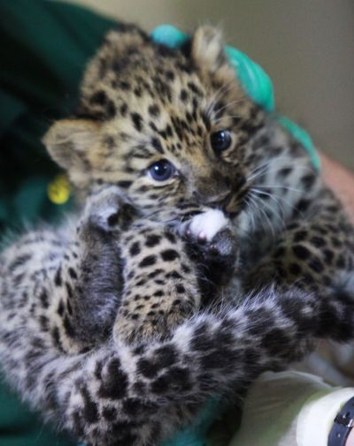 syracuse zoo welcomes critically