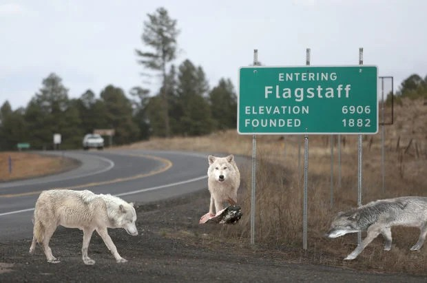 Image result for Flagstaff Daily Sun