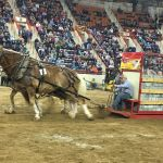 Brothers Pull In Top Honors At Farm Show S Draft Horse Pulling Contest Capital Region Cumberlink Com