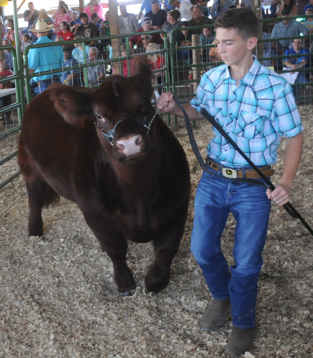Raising The Market For The Greenup County Fair