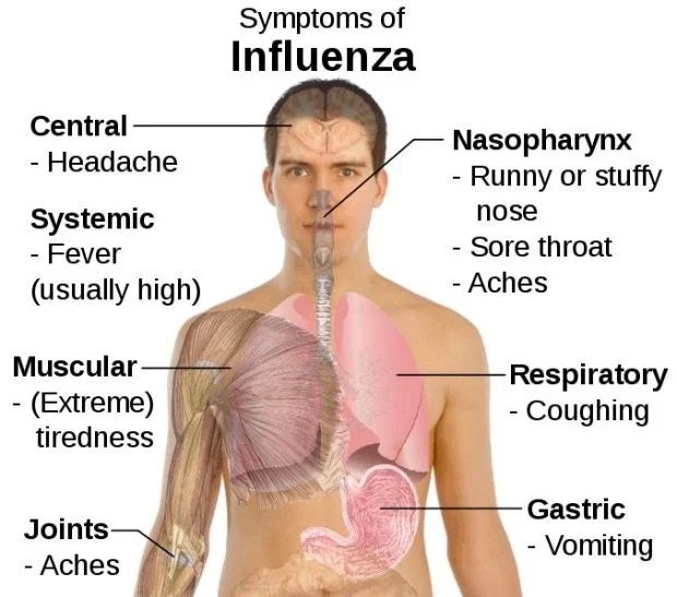 St. Francois County seeing more Influenza Type B | Local News ...