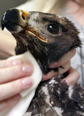 lucky baby golden eagle