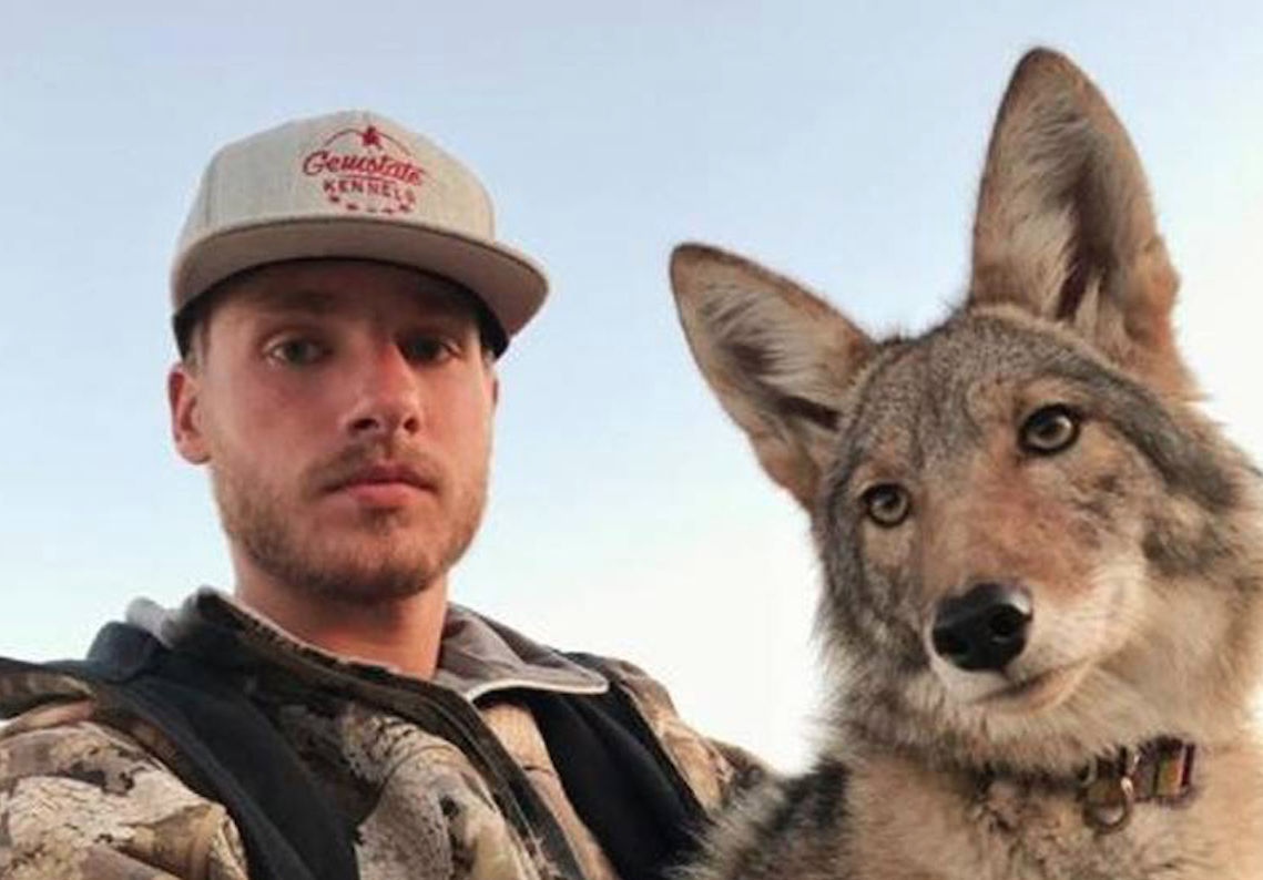 A Coyote Sleeps In This Idaho Man S Bed