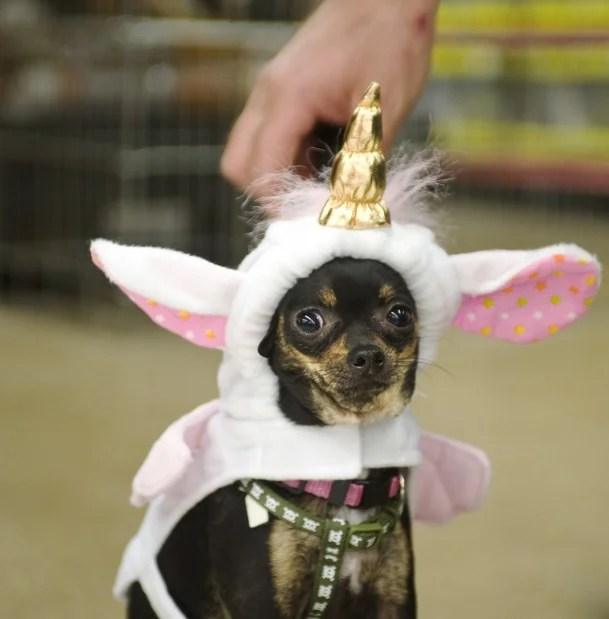 Critters In Costumes We Love To Dress Up Our Pets For