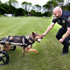 Wheel Chairs For Dogs Home Office Chair No Wheels Uk 39this Means Everything To Us 39 Retired La Crosse Police