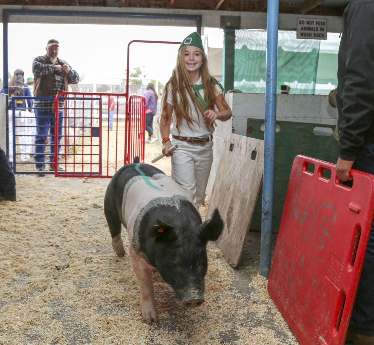 Santa Barbara County Fair Livestock Auction