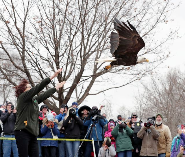 Eagle Release
