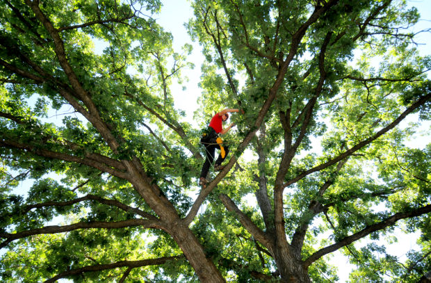 Image result for climbing a tree