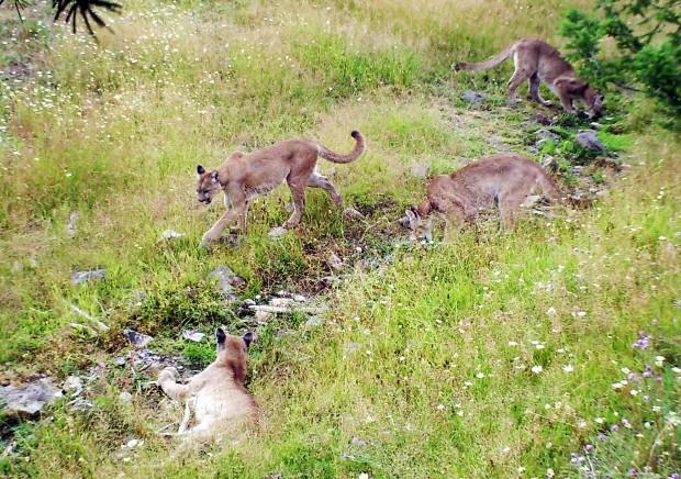 102512 wildlife camera2.jpg