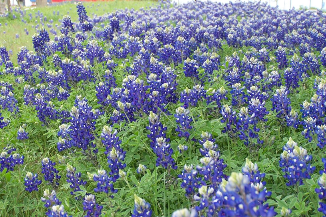 Garden Sense Autumn Is Prime Time For Planting In Central Texas Theeagle Com