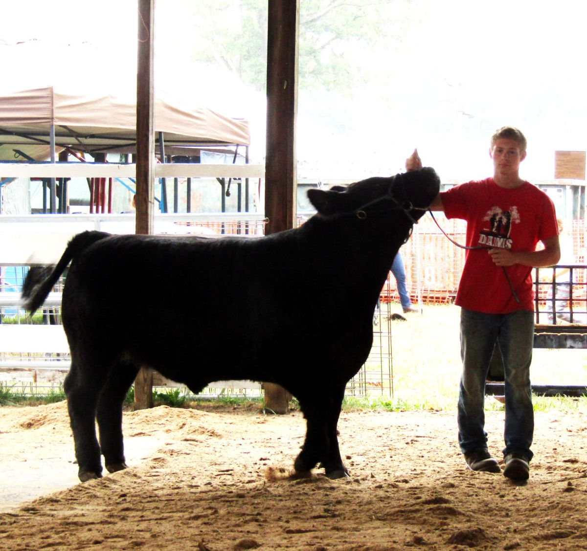 4- And Ffa Owners Livestock Weighed In