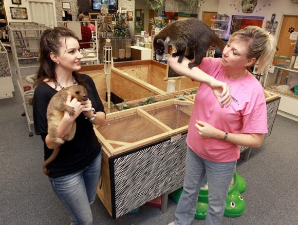 Hewitt Drive store has success offering exotic pets, services ...