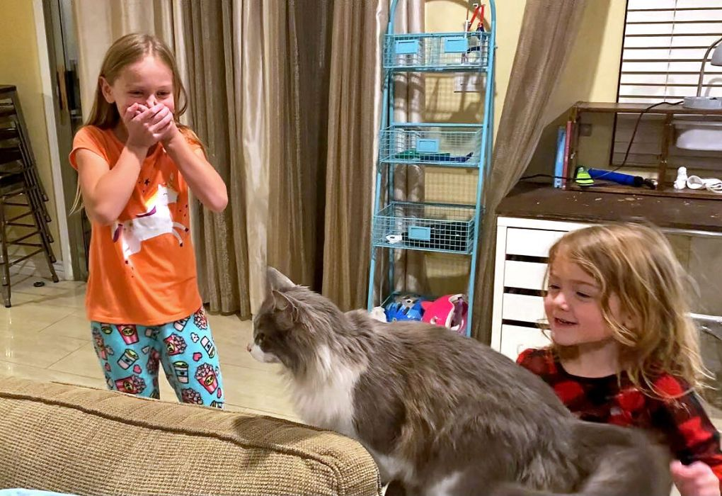 Lexi comes home: The story of a cat's amazing journey from Oregon back to Arizona | State | bendbulletin.com