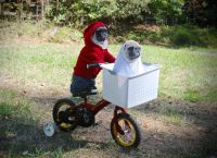 The Pet Shop: Past pet-costume winner offers tips | Blog ...