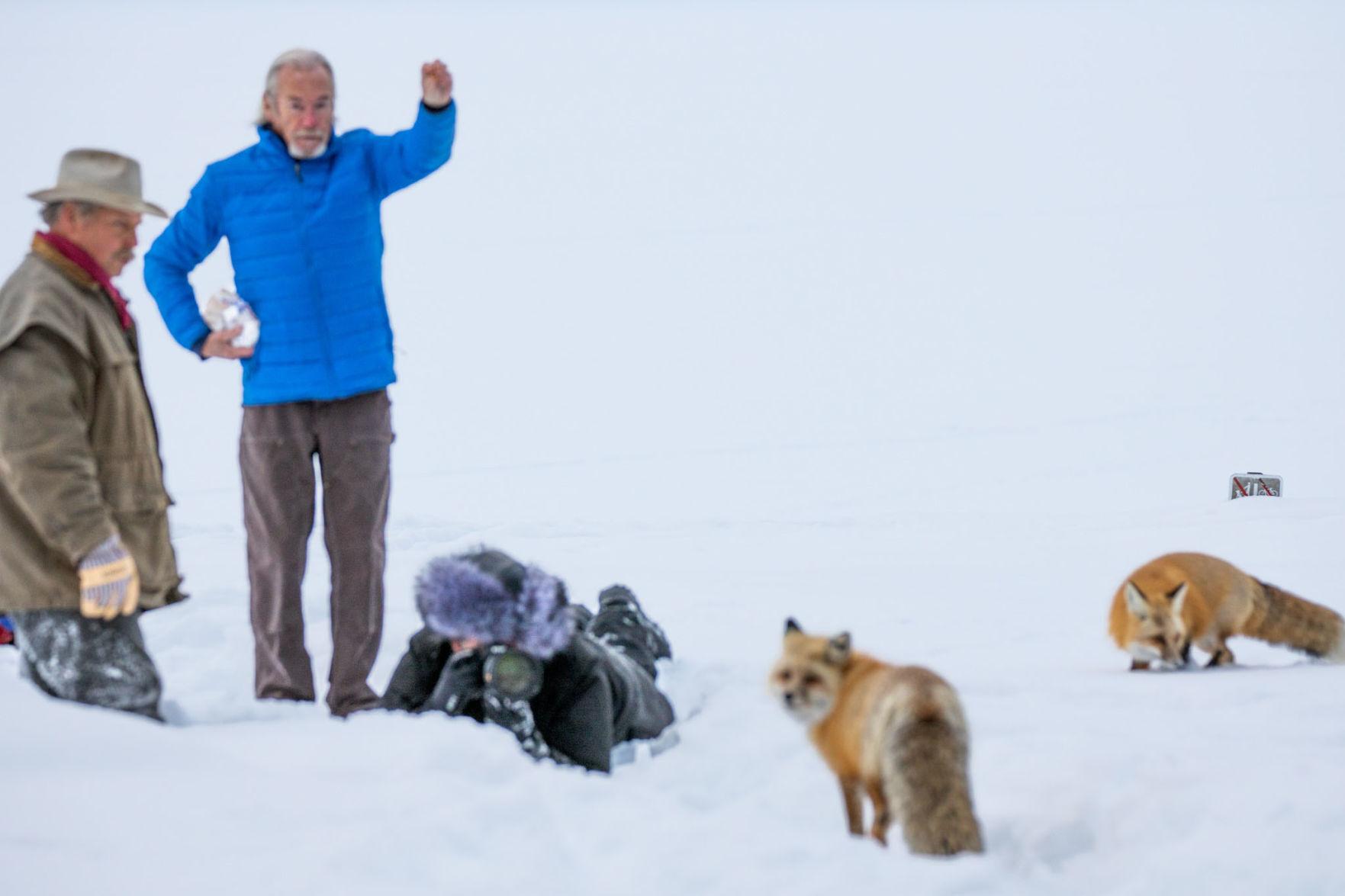World's Highest Paid Wildlife Photographer Caught Endangering Wildlife