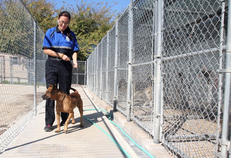 Copperas Cove Animal Shelter