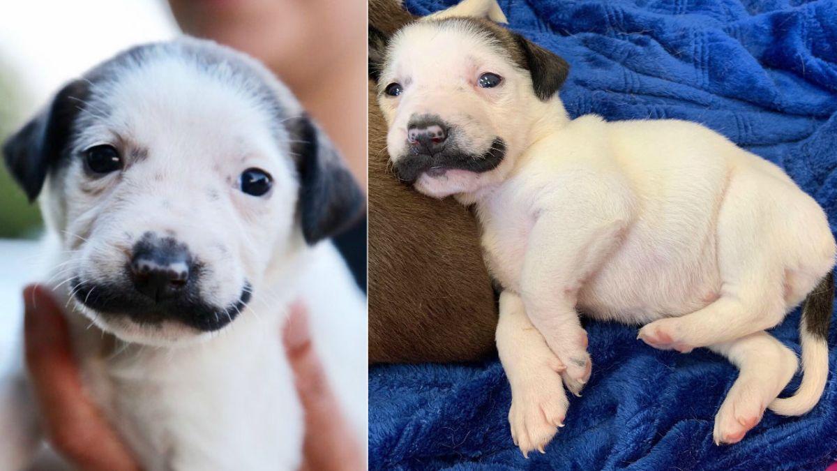 viral rescue mustache puppy
