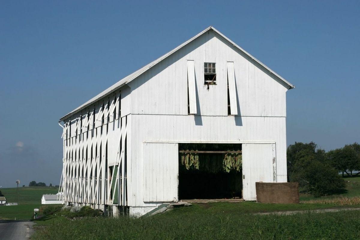 Design Intervention Filling Farmyard Lifestyle