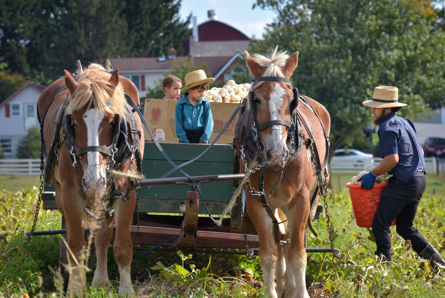 Amish Family on Horse and Buggy in Lancaster County