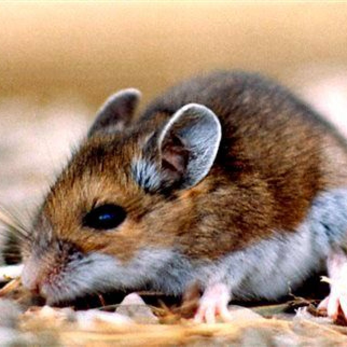 UM student recovers from deadly rodent-borne illness | News ...
