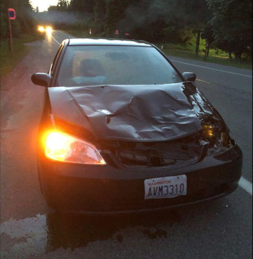 deer hit by car