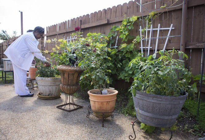 When And How Often Should You Apply Plant Fertilizer Tips Timing More In Dan Gill S Mailbag Home Garden Nola Com