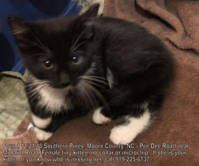 found cat black and