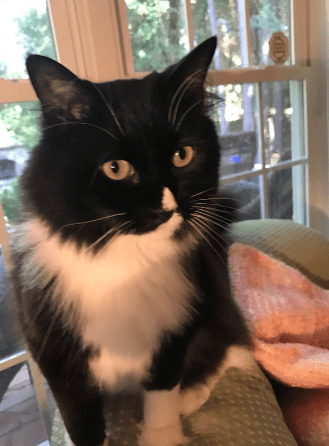 lost cat black and
