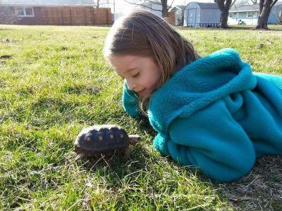 tortoise lost near plano