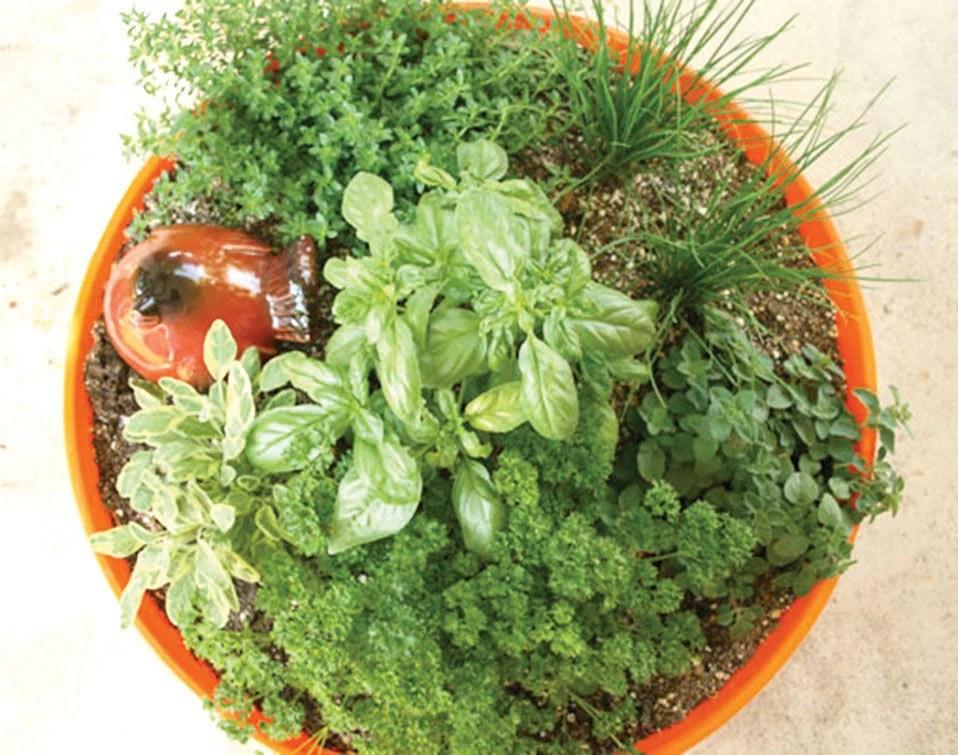 Garden Design Garden Design With Tips For Planting A Container