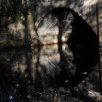 """Weekly Photo Challenge """"Reflections"""""""