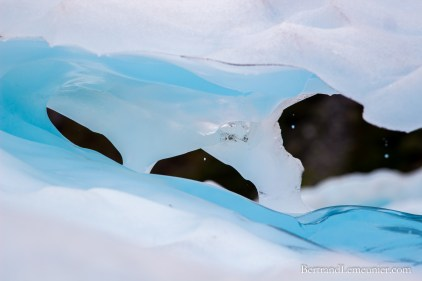 NZ_Westland_Fox-Glacier_ TERRA-TRIBUTA-10