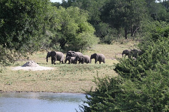 Elephants, Tembe