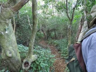 Mgobozeleni Trail pathway