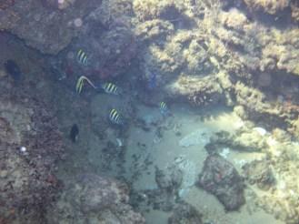 Coral Fish, Mabibi - Keith Booysen