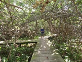 Mangroves by Lake 3