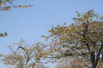 Mystery Birds, Otjimuhaka - Kunene