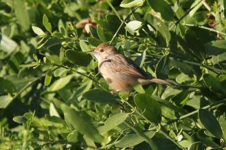 UI Bird, Kunene River Lodge