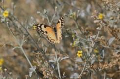 Flutter-bye of some kind? Brandberg